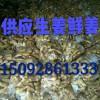 15092861333山东小黄姜价格