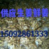 山东生姜产地价格批发大黄姜价格