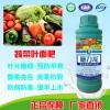 进口淘金者瓶装蔬菜专用叶面肥