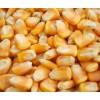 谁知道哪里收购玉米;汉江养殖长期收购玉米黄豆碎米油糠麸皮等