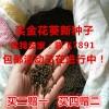 金花葵种子、菜芙蓉种子