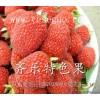 掌叶树莓 覆盆子苗 多种用途致富果苗