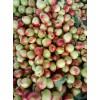 山东油桃批发价格山东红富士苹果大量批发油桃产地蔬菜