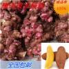 常年批发优质雪莲果种球、雪莲果种子