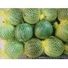 专业西瓜采购-东屯瓜菜种植专业合作社