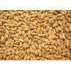 求购糯米大米碎米小麦高粱玉米豆类淀粉等酿酒原料