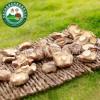 昌盛宝菇优质干香菇500g精挑细选餐厅食堂包子铺专用新货批发