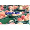 陕西阿布白毛桃产地价格,膜袋阿布白毛桃基地大量上市