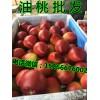 山东省油桃批发市场在哪里